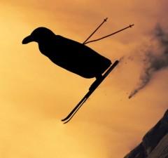 american ski jumping