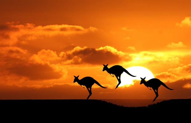 Jumping Kangaroo, Australia's must see destinations