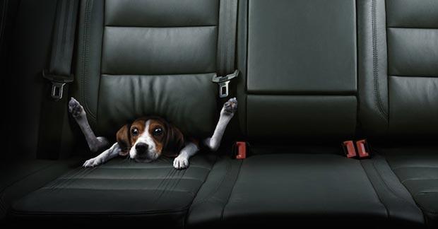 dog-Christoph--Gilbert